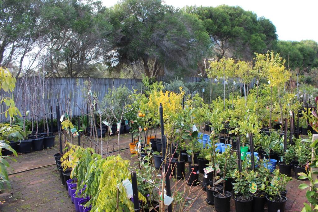 Plants & Planter Boxes Melbourne | Pots Galore